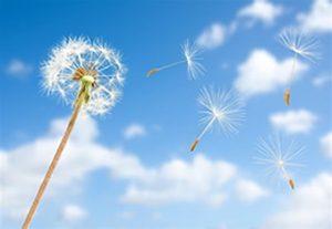 vento 3