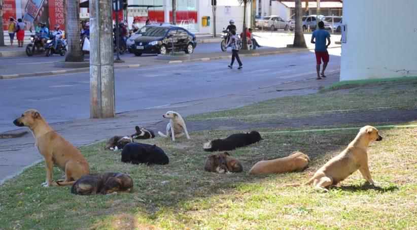 Montes Claros Cachorros de Rua Foto Fábio Marçal