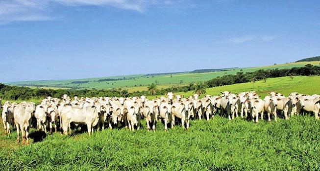 Idoso vende cabeças de gado por R$ 14 mil e é assaltado na zona rural de São João do Paraíso