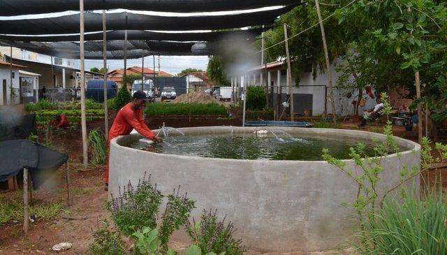 Projeto implantado em Presídio de Janaúba ensina detentos a trabalharem com piscicultura